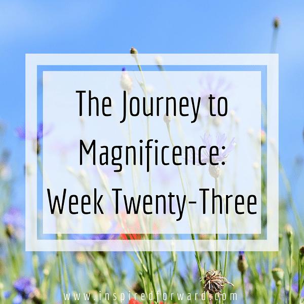 week twenty-three featured image
