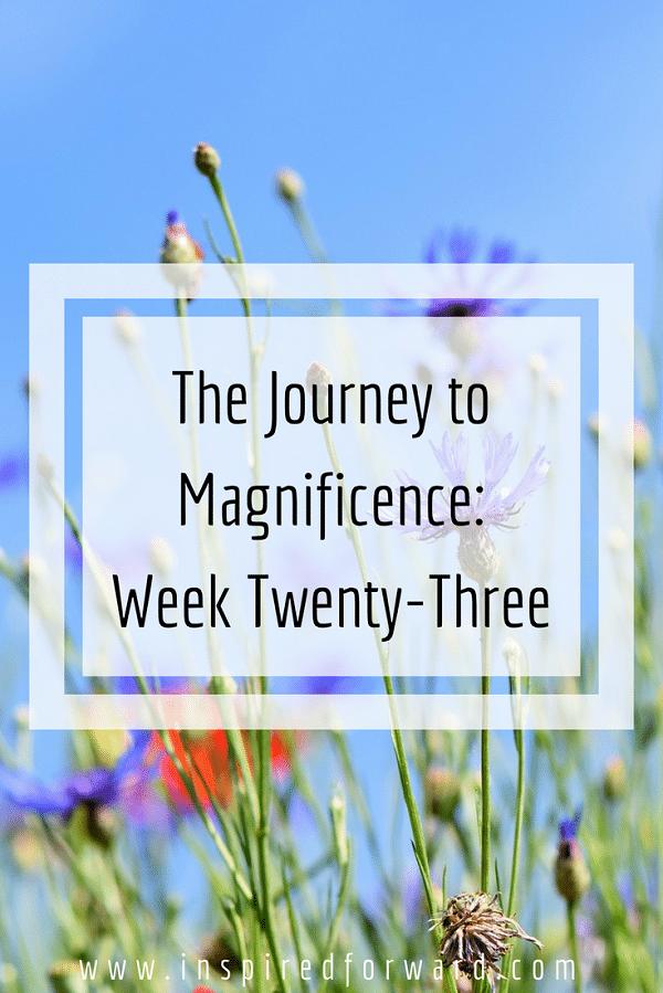 week twenty-three pinterst-v1