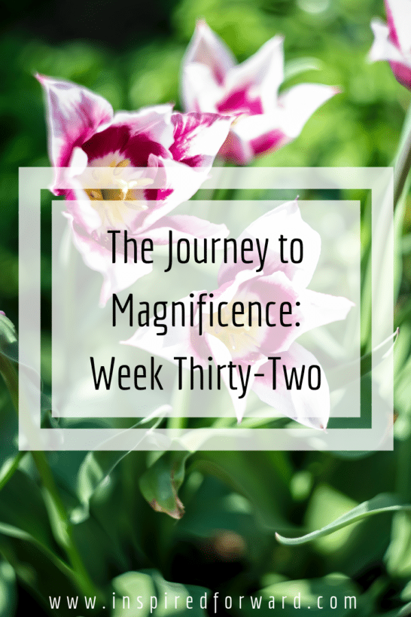 week thirty-two pinterest