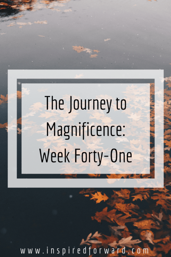 Week forty-one: Thanksgiving, NaNoWriMo, and a long weekend filled with a lot of Steven Crowder videos and playing Pokemon Go. AKA distractions...