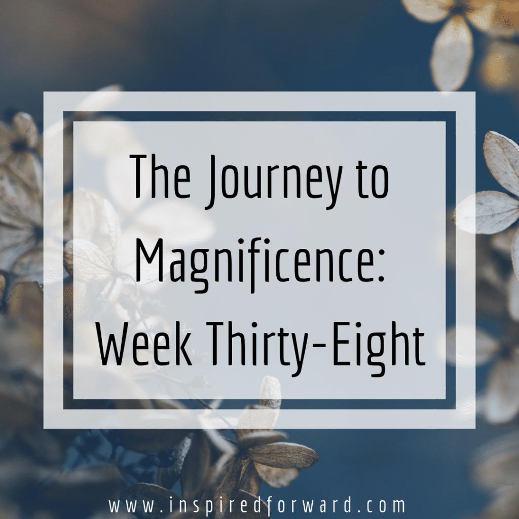 week thirty-eight instagram
