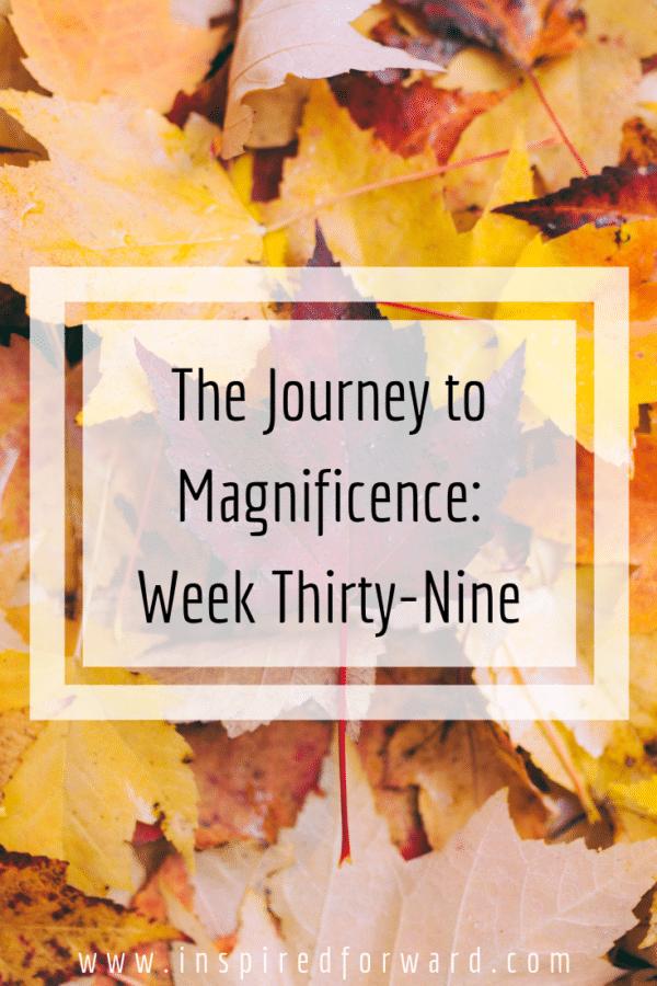 week thirty-nine pinterest