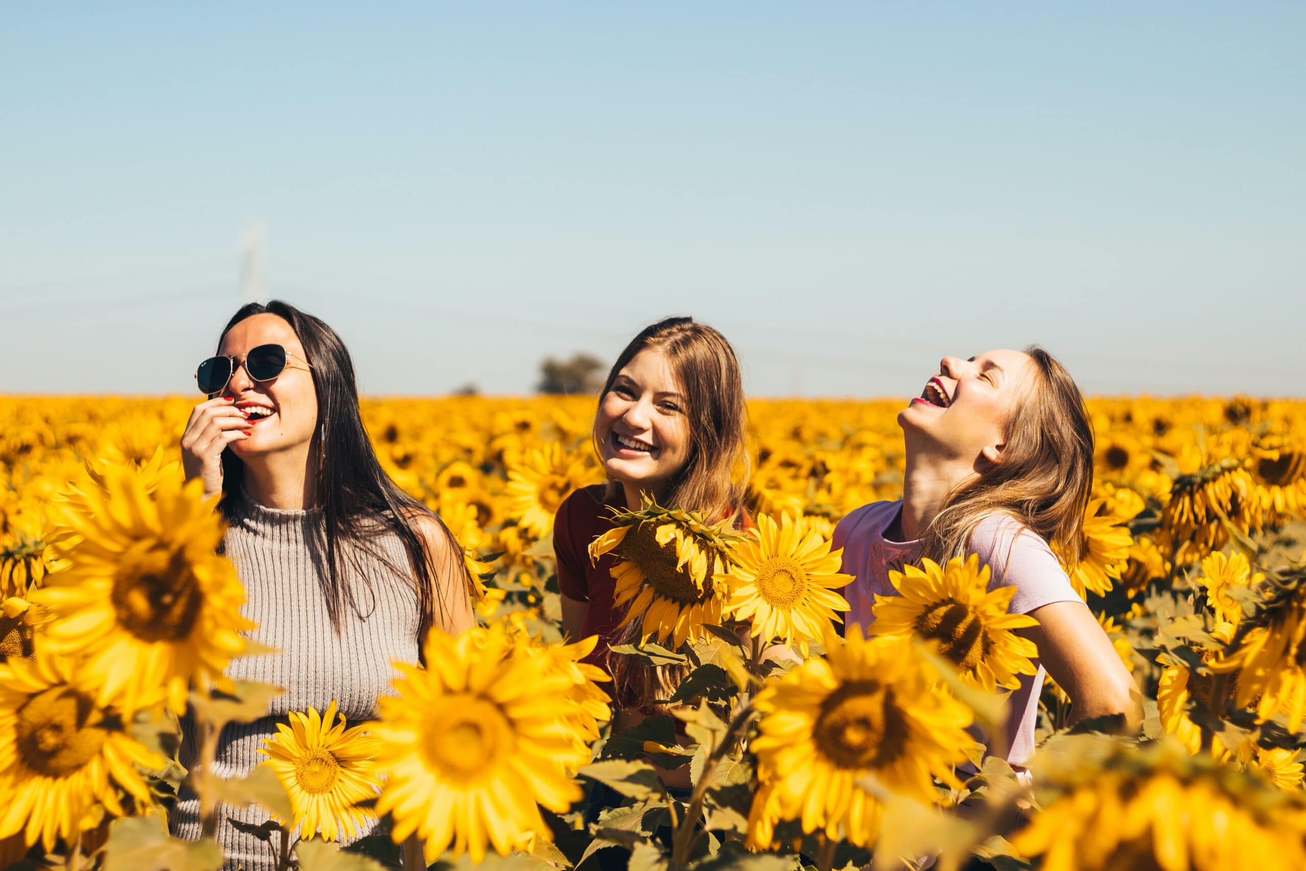 three woman laughing in sunflowers field